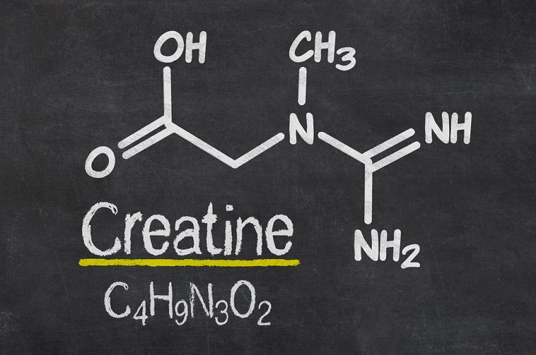 why is creatine in pre workouts