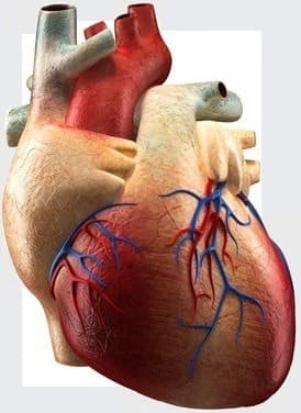 Heart problems from steroids